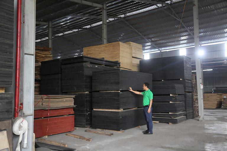 Giám định gỗ ép
